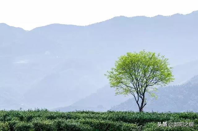 总想念这里的绿意葱茏 景宁地处浙南山地中部,自然境内群峰林立,洞宫图片