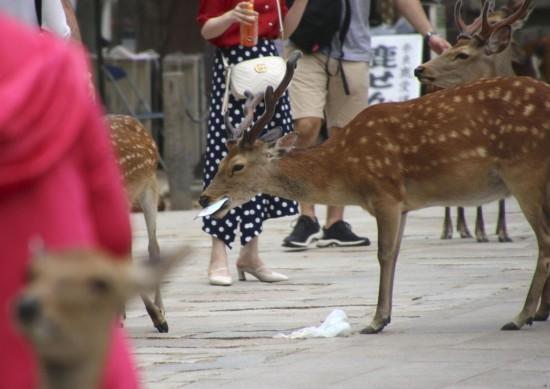 痛心!日本奈良公园9只鹿因吞塑料袋惨死?