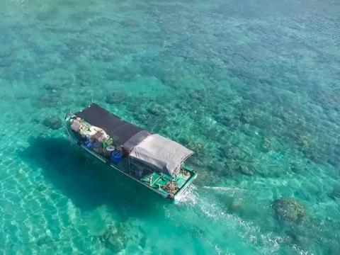 大洲岛,媲美美娜多的潜水圣地,海参海胆海螺随处可见