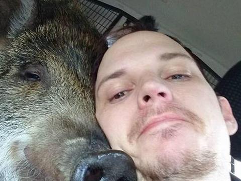 小哥在市区遛300公斤宠物猪被罚3800元,千人请愿取消罚款