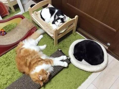 """三只猫轮流照看小主人,被称为""""猫保姆"""",宠物和宝宝能共存吗?"""