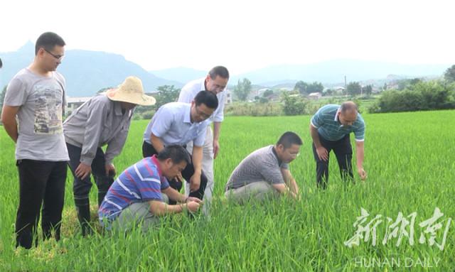 靖州:开展生产自救 积极防治病虫害