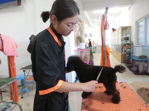 学习宠物美容师培训技术需要多少钱
