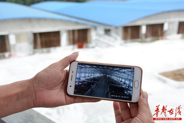 【扶贫风信子】电信网络,把智能化养殖带进乡村