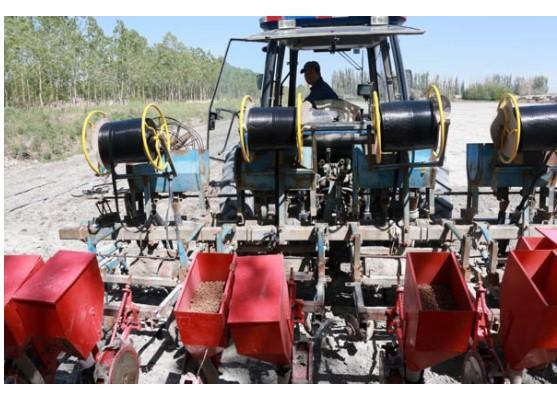 虎坚果产业铸就活力乡村经济体