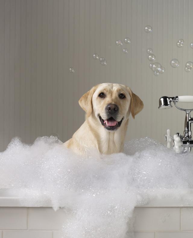 周岁之内的狗狗可以经常洗澡吗_给狗洗澡的小常识,别总说不能用人的沐浴露|狗狗|用人