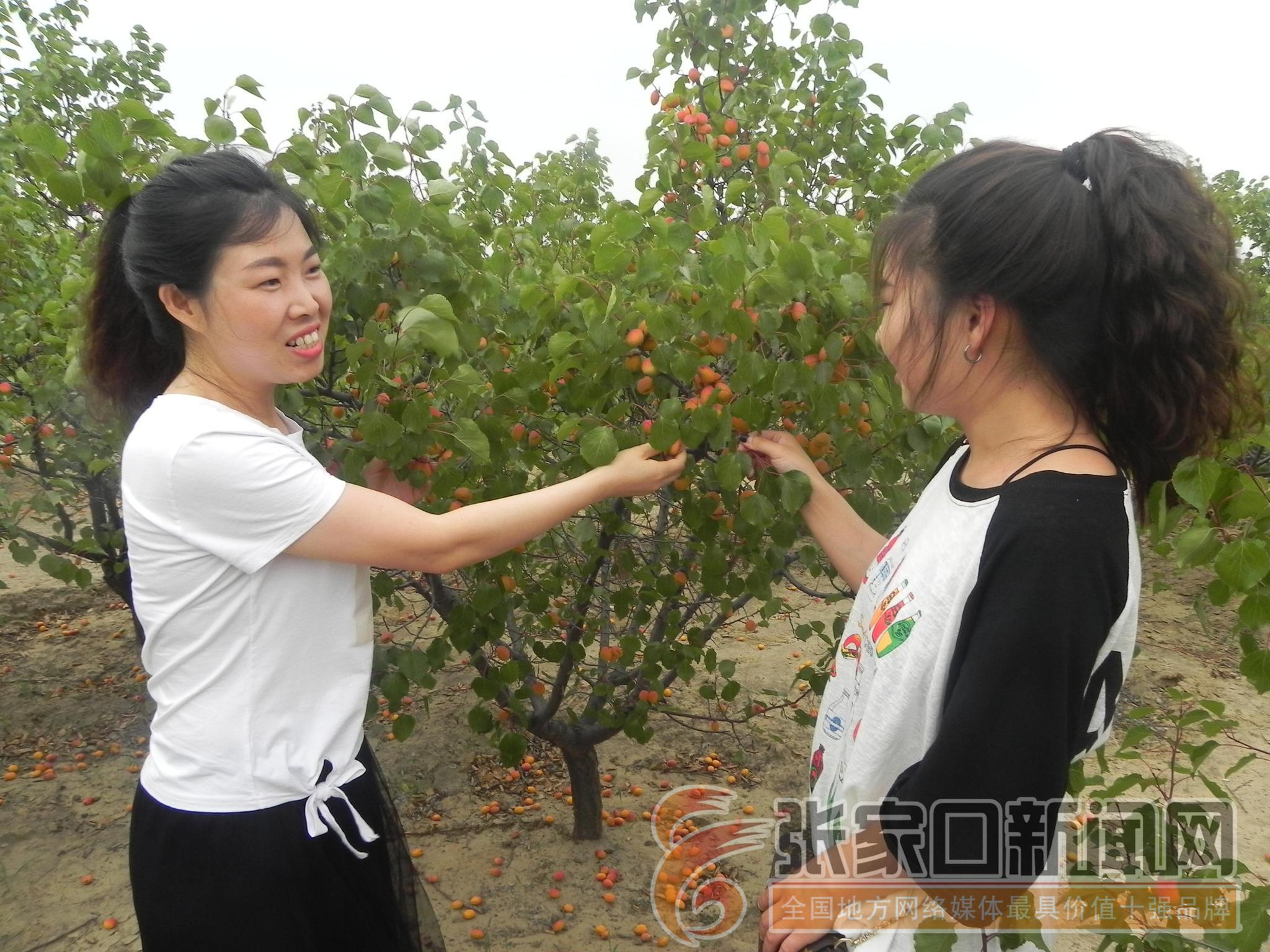 偷偷撸摸网站_张家口新闻网记者 张进宝  通讯员 院玉顺 尹辉