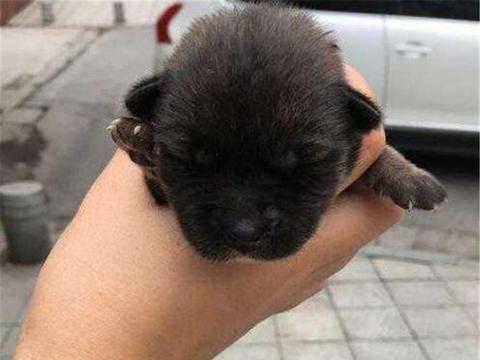 男子意外捡到小奶狗,想寄养在宠物店却被拒绝,理由让人很心塞!