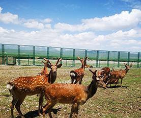 假期到四川旅游 看草原看花湖看梅花鹿好耍惨了