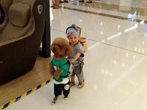 宝妈带着儿子和泰迪逛商场,引得众路人笑声不断,纷纷拍照夸赞