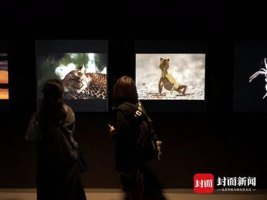 成博野生动物摄影展开展 动人心魄作品竟出自青少年之手