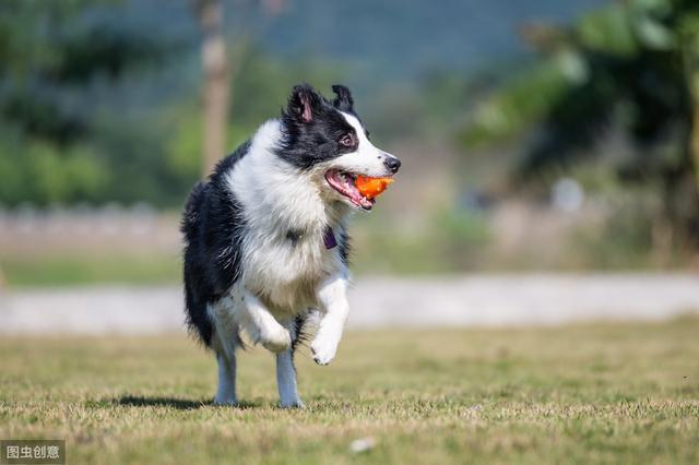 最适合家庭饲养的狗狗,有你家的狗狗吗?