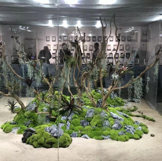 福利丨不用出广州,免费看五大洲?生态昆虫艺术展来了!