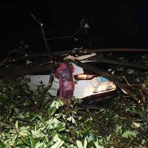 狂风吹倒大树砸中行驶轿车辆,武警官兵迅速救援