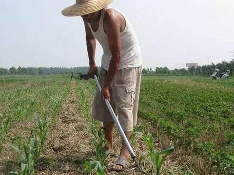 """农村土地""""抛荒""""越来越多,为啥有的农民种地不赚钱还要种"""