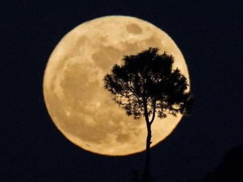 宋代最潇洒诗句,28字清丽无比,全篇无一笔写月,却又处处见月