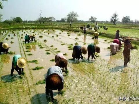 中国农业正在经受史无前例的考验!三农现状令人担忧