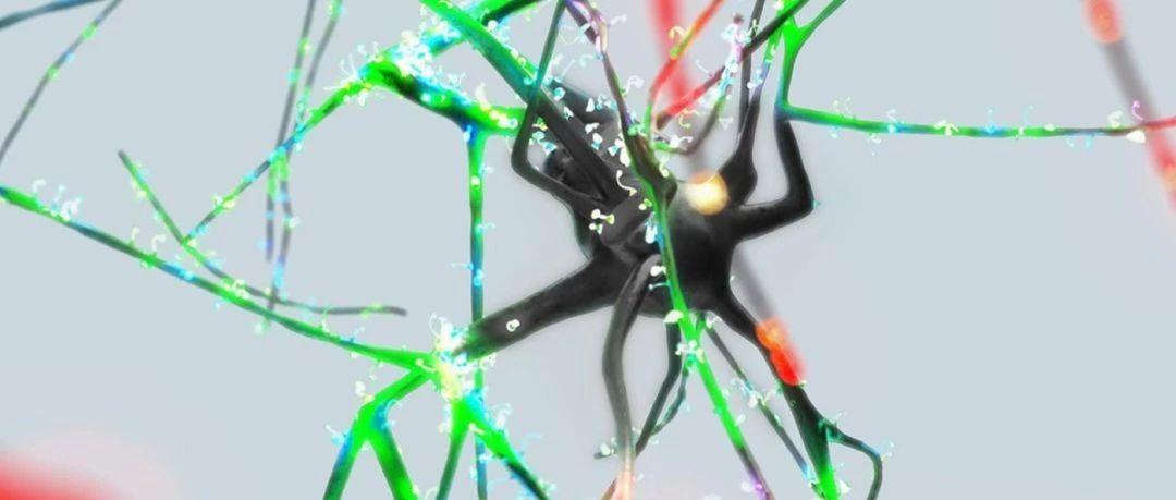 """""""蓝脑项目""""新成果:随机应变的神经元就像一台""""智能并行处理器"""""""