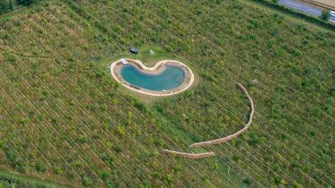 英国歌星ED Sheeran因将野生动物池塘改造成私人泳池惹恼邻居