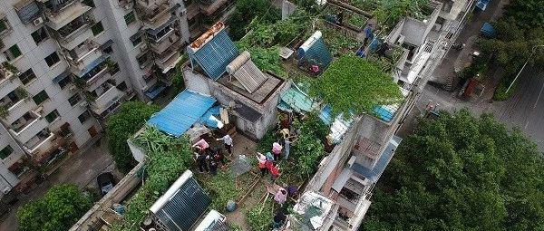 """南宁一小区有个""""空中农场"""" 一栋楼能清理出100只鸡"""