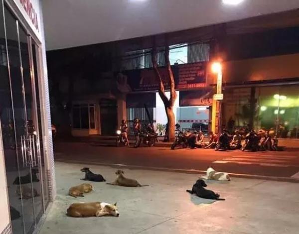 女主人临产被送上救护车,结果家里的狗狗全都跟着上车了