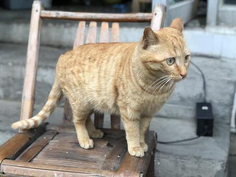宠物猫为啥不会抓老鼠?猫:我妈没教!