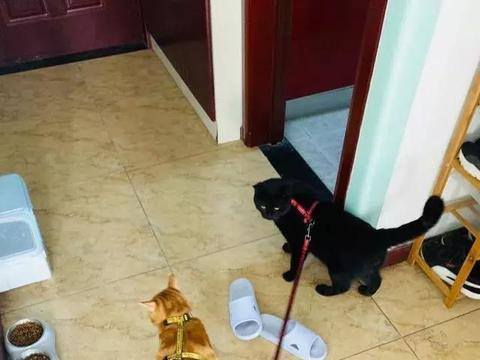 流浪的人都会渴望拥有一个家,那流浪的猫呢?会羡慕宠物猫吗?