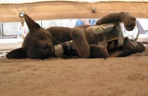 """""""无知猫主人""""给宠物猫喝了一瓶啤酒,不料猫咪酒劲上头咬伤主人"""