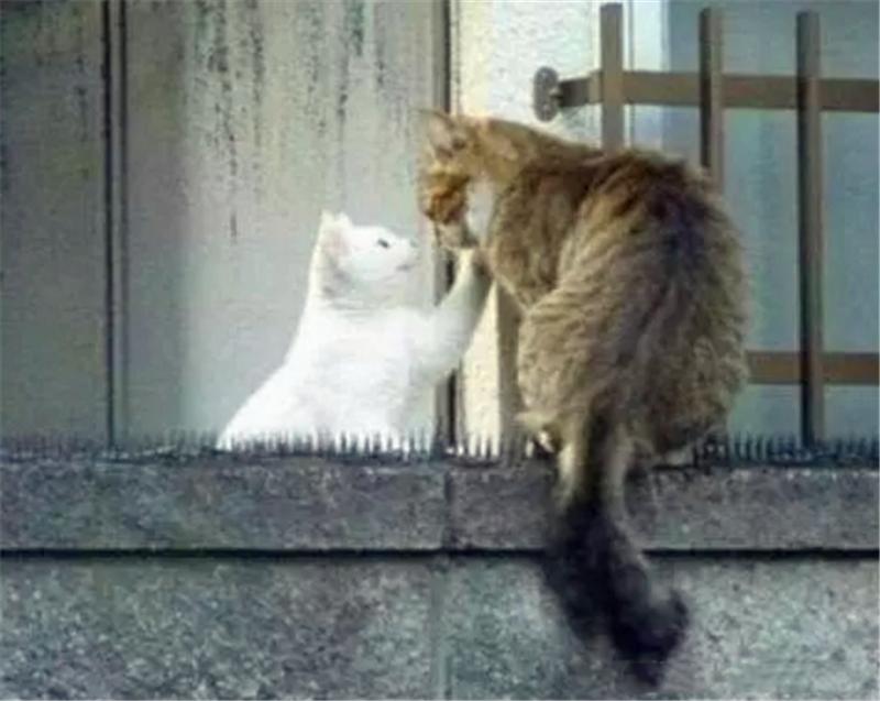 猫咪强忍疼痛走过防猫垫,只为每天到这里,得知真相后感动众人