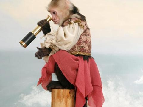 主人将宠物猴装扮成这样,顿时红遍网络,衣服还受到热卖