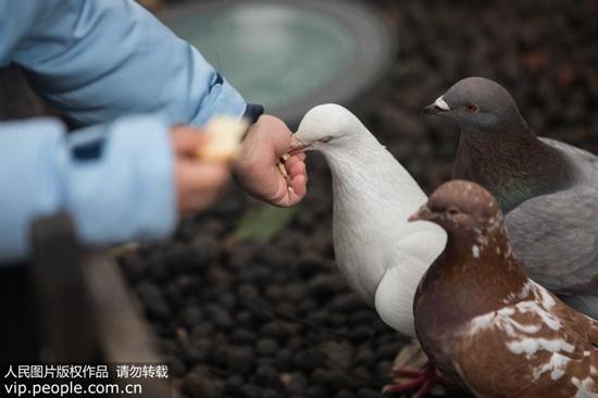 喜欢在家中饲养鸟类?隐球菌肺炎需警惕