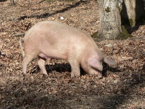 欢迎举报!武平发布严厉打击乱丢滥弃病死猪违法行为的通告