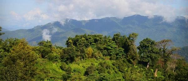 布朗山田野笔记|曼捌印象:边境、山地、少数民族与茶