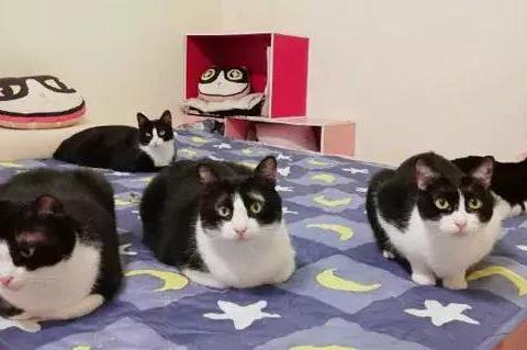 最近天气冷,网友一开电热毯家里的猫们就全上来了,关键是……