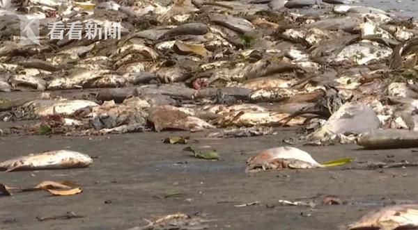 视频 20吨金鲳鱼撒落一地!货车高速爆胎 村民趁乱哄抢