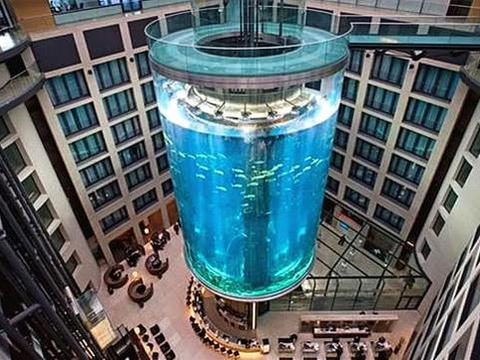 造价近1亿的人民币的鱼缸,拥有鱼类有56种,却装在了酒店里