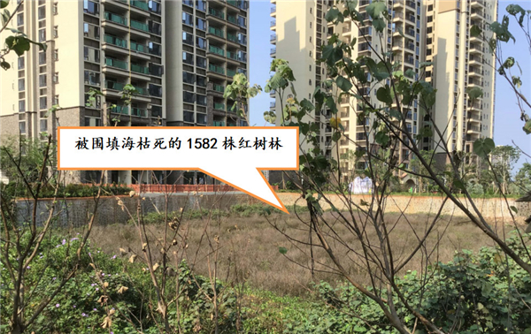 海南澄迈县围海造地毁坏红树林 生态环境部:十分恶劣