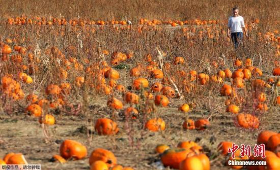 美食物浪费严重 统计:每年丢弃约6000万吨农产品|农产品