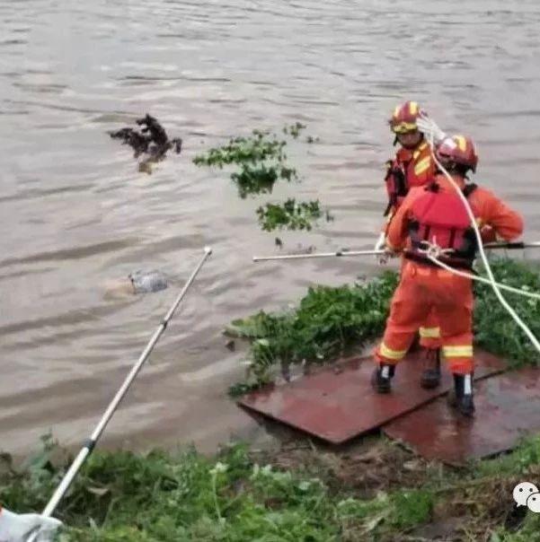 洪水冲走上林3位居民,百人施救:1人获救1人失联1人身亡