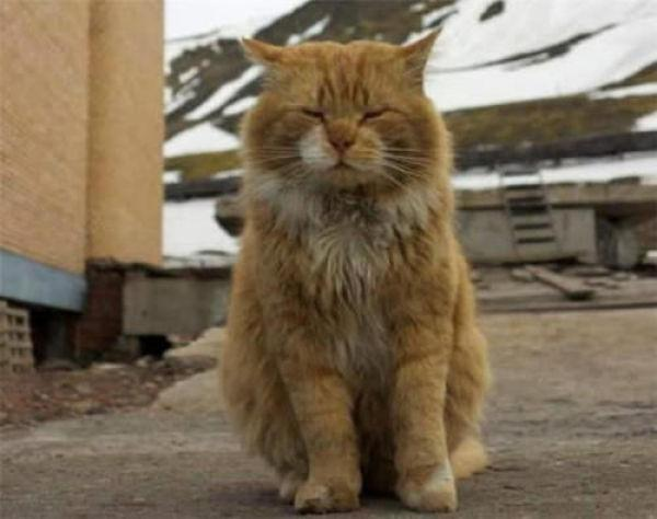 """全球唯一禁猫的岛,它却冒充""""狐狸""""留下来,却意外受宠"""