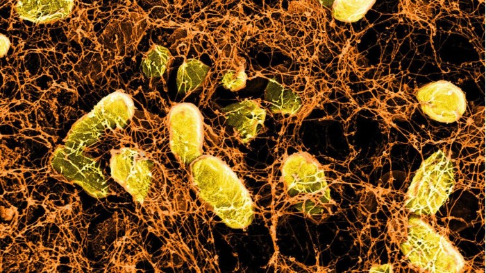 哈佛利用细菌打造喷雾式水凝胶 可治愈内脏伤口水凝胶凝胶愈合