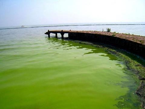 """中科大针对巢湖水华治理进行攻关,如今找到蓝藻的""""天敌"""""""