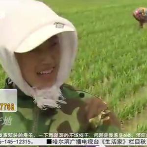 """走进五常,合作社村民做好水稻种植,""""稻花香米""""大米人人夸"""