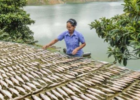 依靠万峰湖渔业资源 办起小作坊