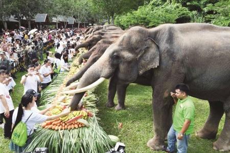 西双版纳关爱亚洲象