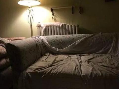 喵星人睡在暖气片上,醒来发现脸变成方形,一脸懵逼真是太逗了