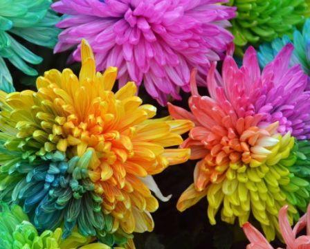 """养花就养""""七色花"""",花开如彩虹般绚丽,呈现流光溢彩的俏美!"""