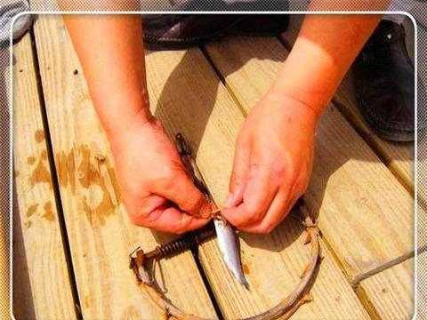 男子将小鱼绑在老鼠夹上, 扔进水里十分钟后,拉上来让人不相信