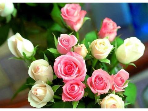 卧室里不是什么花都能养?教你此样做,带来清新舒适环境