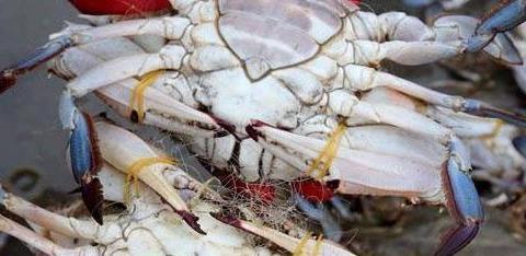 爱吃梭子蟹不会挑?海鲜店老板分享技巧,保准个个肥美,太实用了